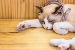 Раны и ушибы у кошек - что делать, первая помощь