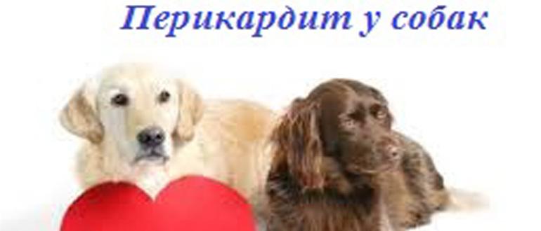 Перикардит у собак - симптомы, лечение