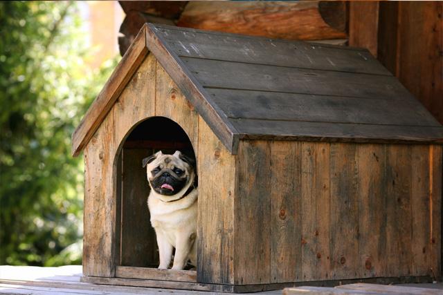Собака живет на улице - советы хозяину