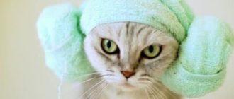 гигиена кошек