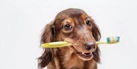 кариес у собак