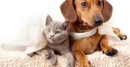 терапия вирусов собак и кошек