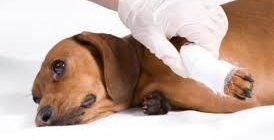 опухоль костей у собак