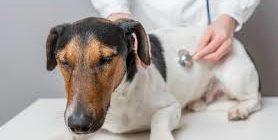 остановка дыхания у собак