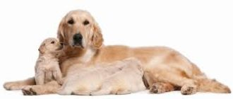 опухоли у собак