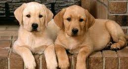 кормление собак в период размножения