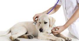 язвенная болезнь у собак