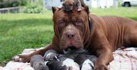 кормление щенков