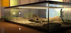 террариум для ящериц