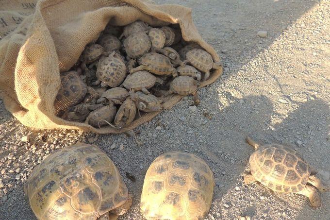 Общие правила ввоза/вывоза черепах заграницу
