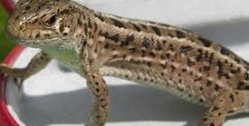 кормление ящериц
