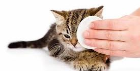 уход за глазами кошек