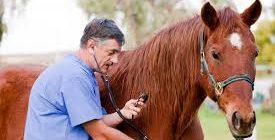 здоровая лошадь