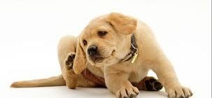 аркоптоз у собак