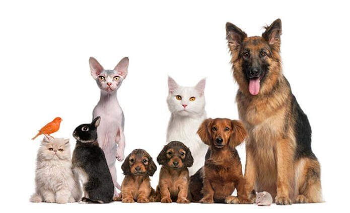 Ветеринарный портал